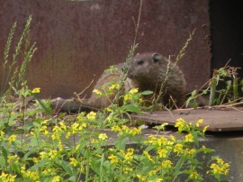 PA - Spring Beaver (PA)
